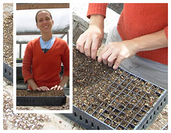 Super-intern Arminda sowing in the greenhouse