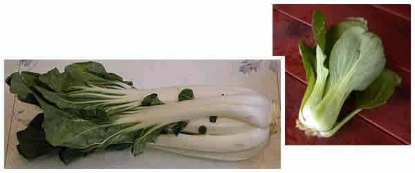 Bok choi and Mei Qing Choi compared
