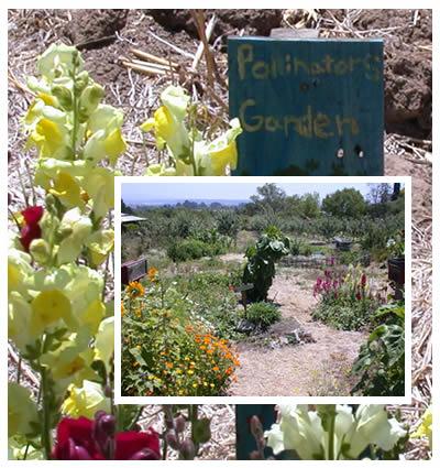 The education garden