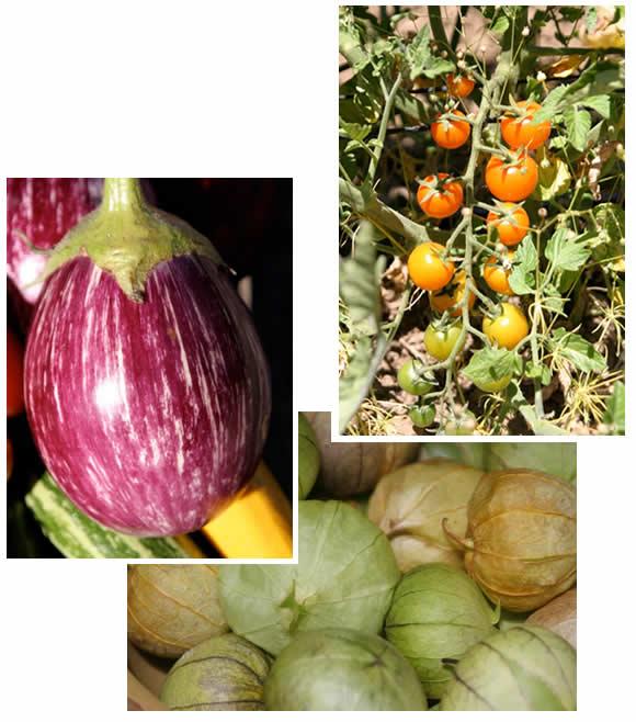 Eggplant, cherry tomatoes, tomatillos