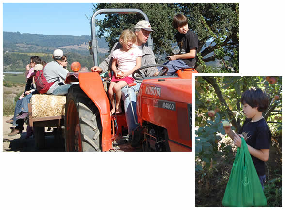 Tom takes children of all ages for a tractor ride to the apple orchard.
