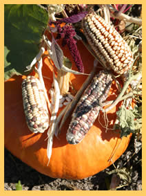 Fall Harvest decorations