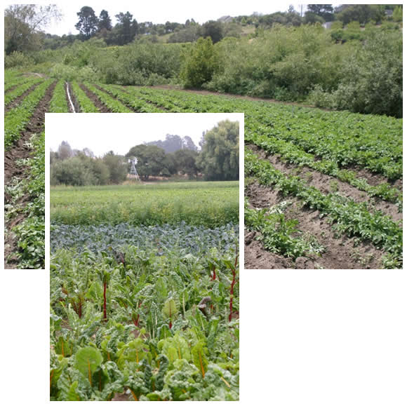 Crop fields adjacent to wildlands and riparian corridor