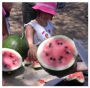 Cutting watermelon, fresh from the field!