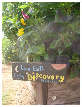 Hand-painted Discovery Program sign