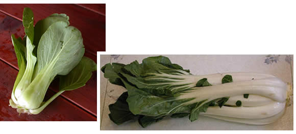 Mei qing choi and pak choi, compared side by side