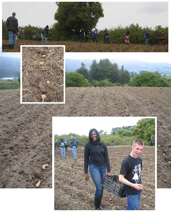 planting a field of potatoes with the kids from Clark Montessori