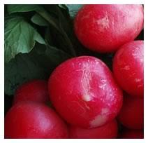radish closeup