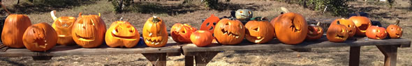 LEFDP row of children's carved pumpkins