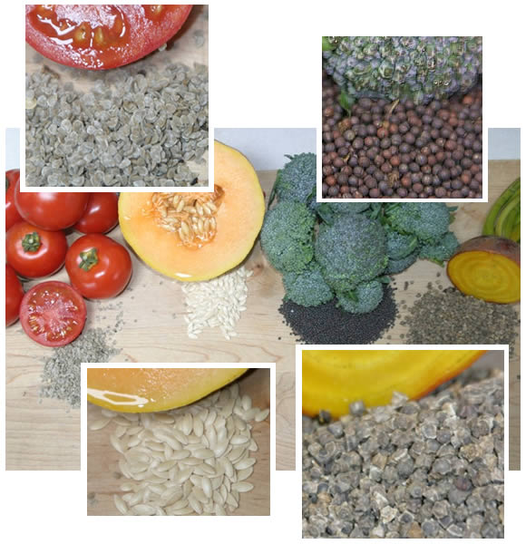 Heirloom seeds and their respective vegetable