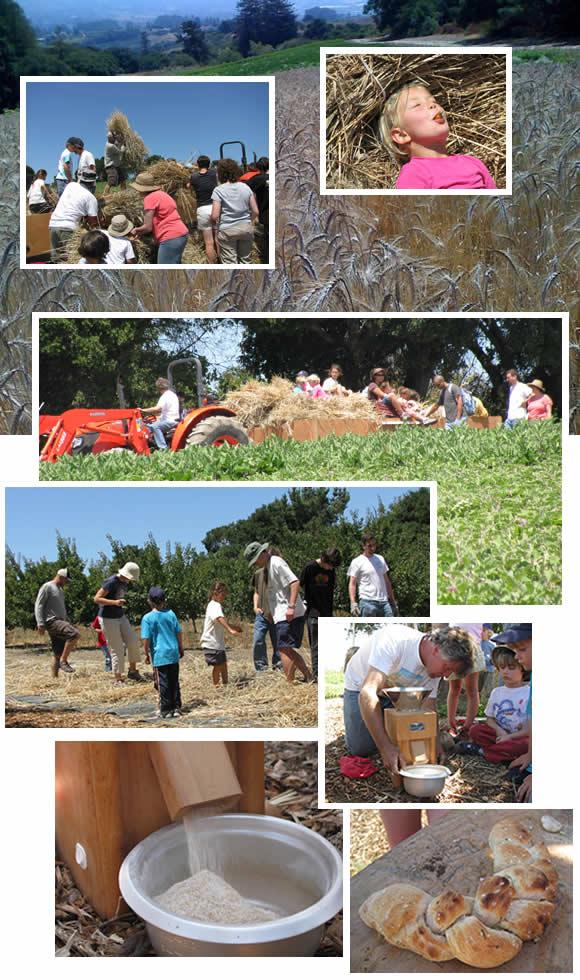 Community Farm Day August 2009