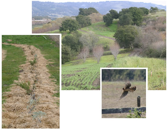 New hedgerow; native grasses plantings; hawk